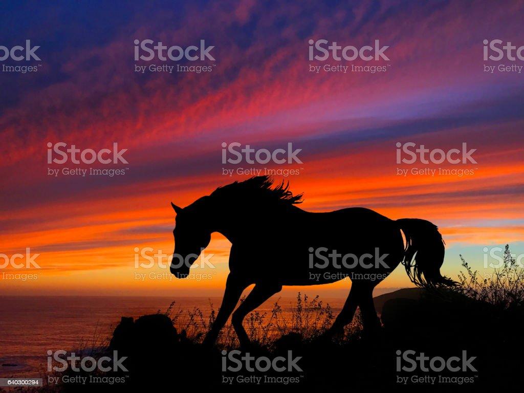 Horse Silhouette Sunset stock photo