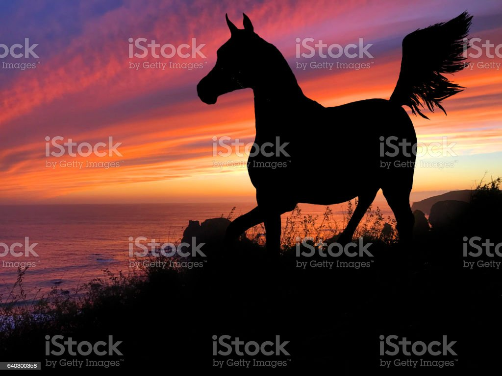 Horse Silhouette Sunset Stock Photo Download Image Now Istock
