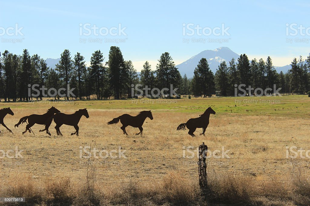 Horse Silhouettes stock photo