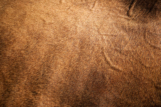 Horse Skin Full Frame Horse Skin. cowhide stock pictures, royalty-free photos & images