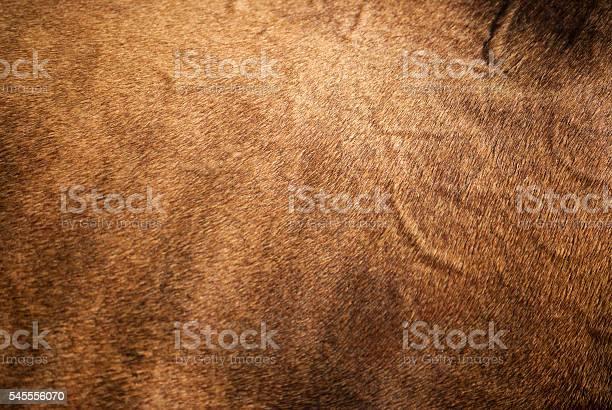 Photo of Horse Skin