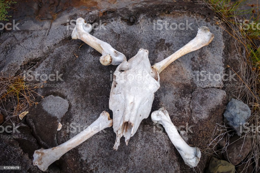 Horse skull and bones stock photo