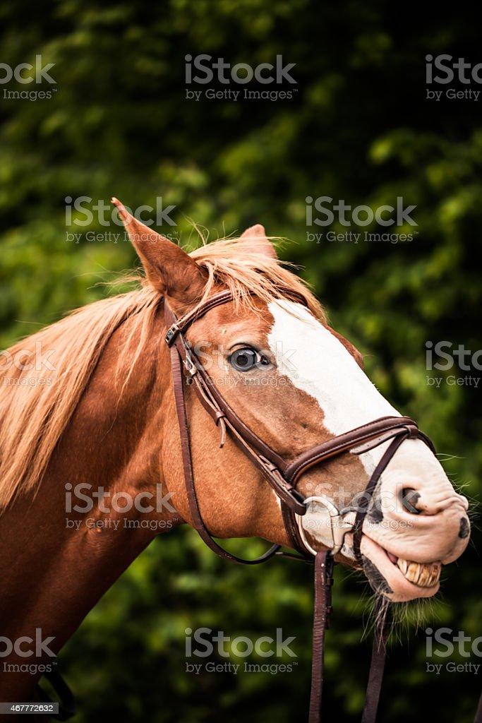 Horse Lächeln – Foto