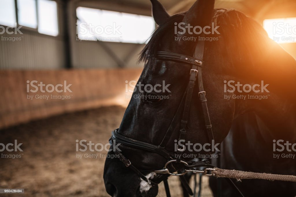 horse stables saddle close up with sunlight on the background stock photo