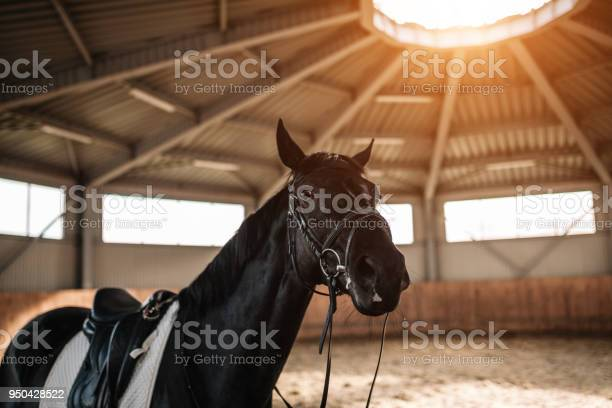 Horse stables saddle close up with sunlight on the background picture id950428522?b=1&k=6&m=950428522&s=612x612&h=508y3b hx12mo0jf8l9kaqnswdvdyo90v0gkgng suw=