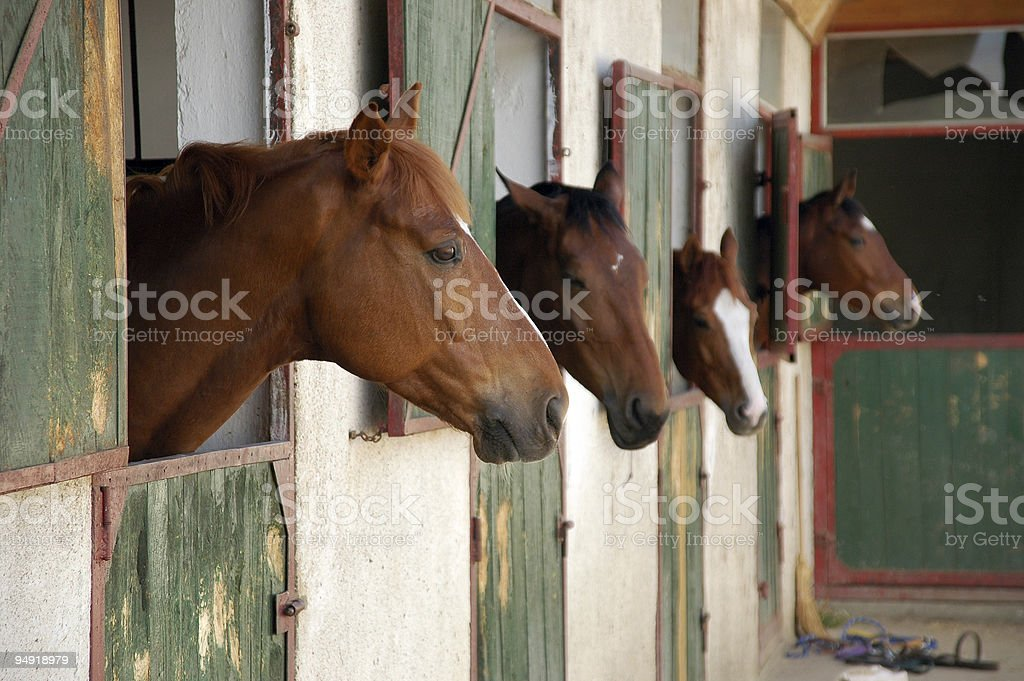 Pferd-Marktstand – Foto