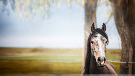 istock horse standing and looking at camera over nature background 500675762