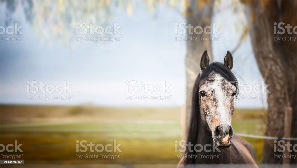 horse standing and looking at camera over nature background stock photo