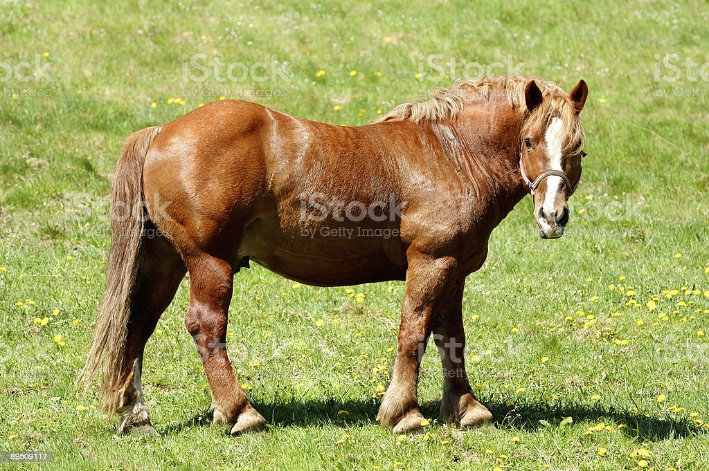 Horse standing at the meadow royalty-free stock photo