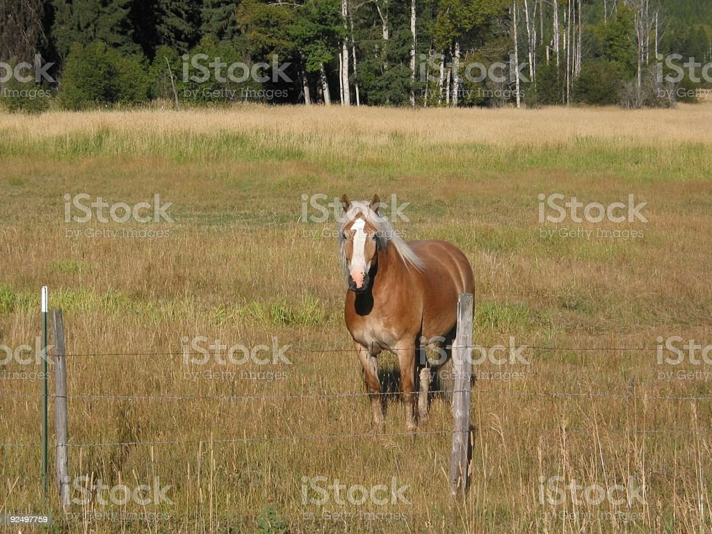 Horse standing in a pasture. royalty-free stock photo