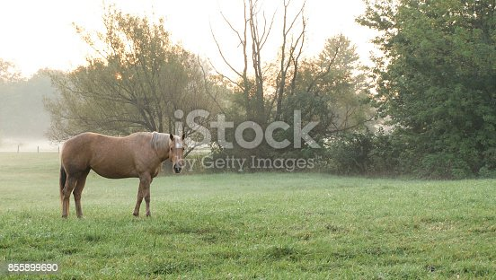 Horses standing in field during a foggy sunrise.