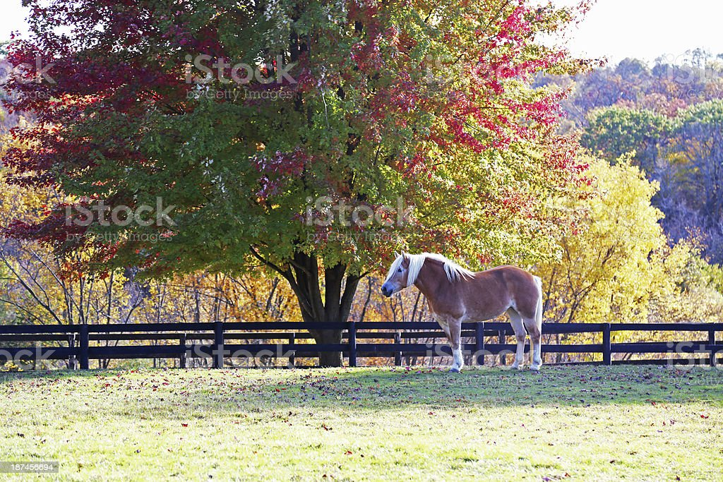 Horse standing under tree in autumn royalty-free stock photo