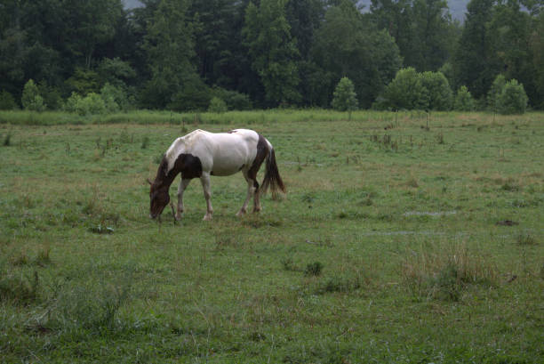 Horse standing with head down in field stock photo