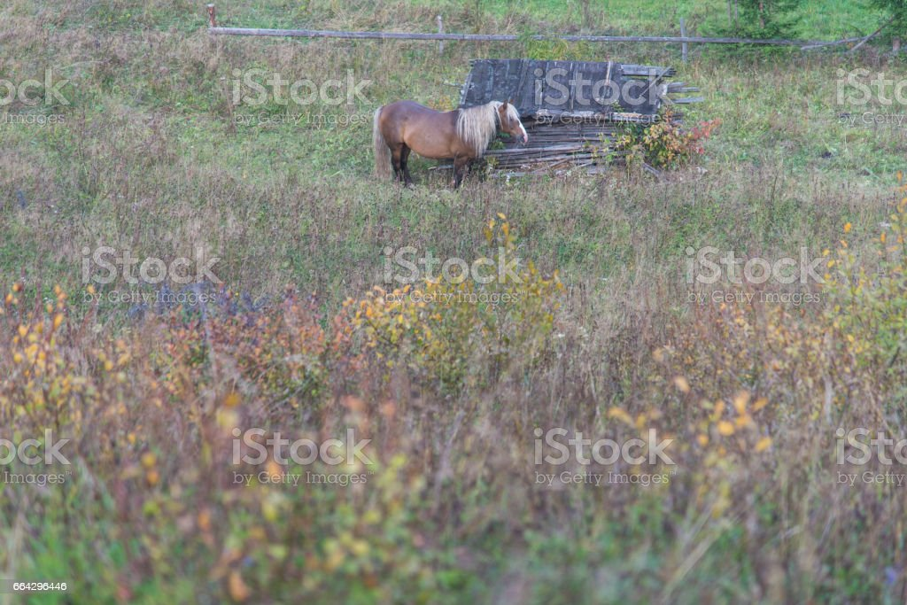 A horse stands in the middle of the field. stock photo