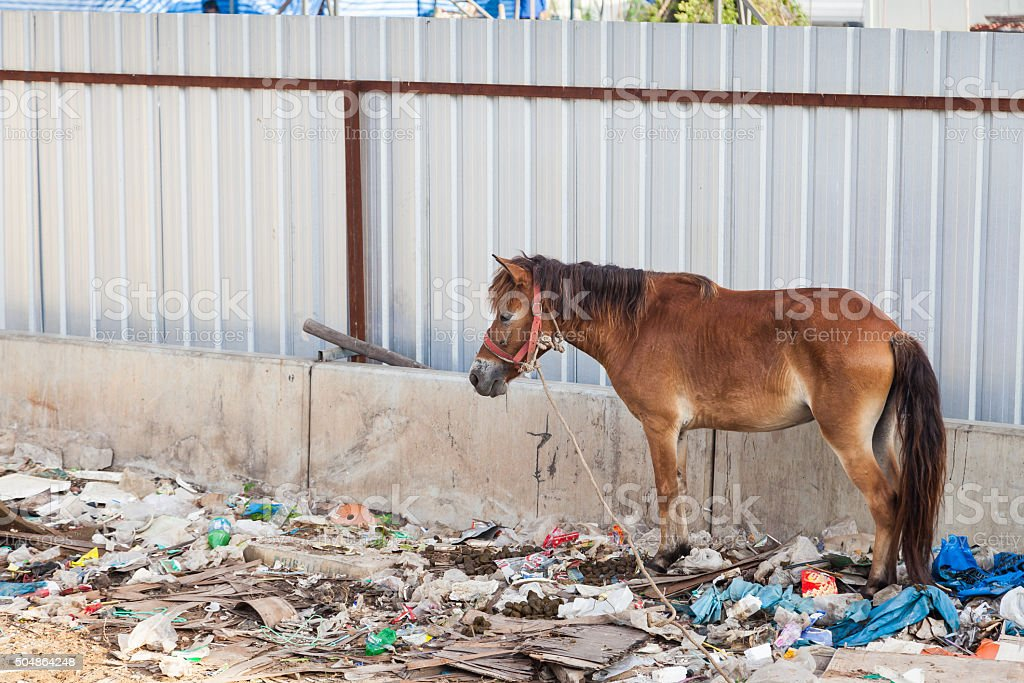 Horse stands in the waste and its own excrement. stok fotoğrafı