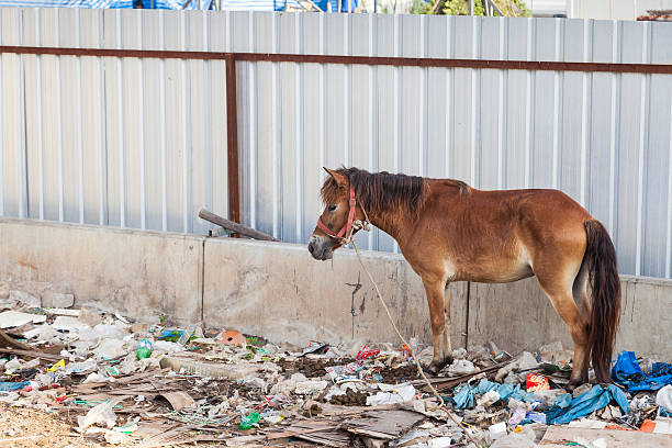 Horse stands in the waste and its own excrement. stock photo