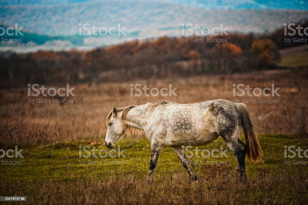 A horse stands on a field against a background of wood stock photo