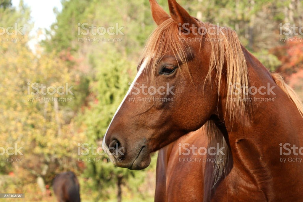 Horse stands on green field in autumn stock photo