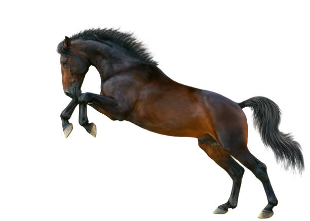 A horse stands on the hind legs. – zdjęcie