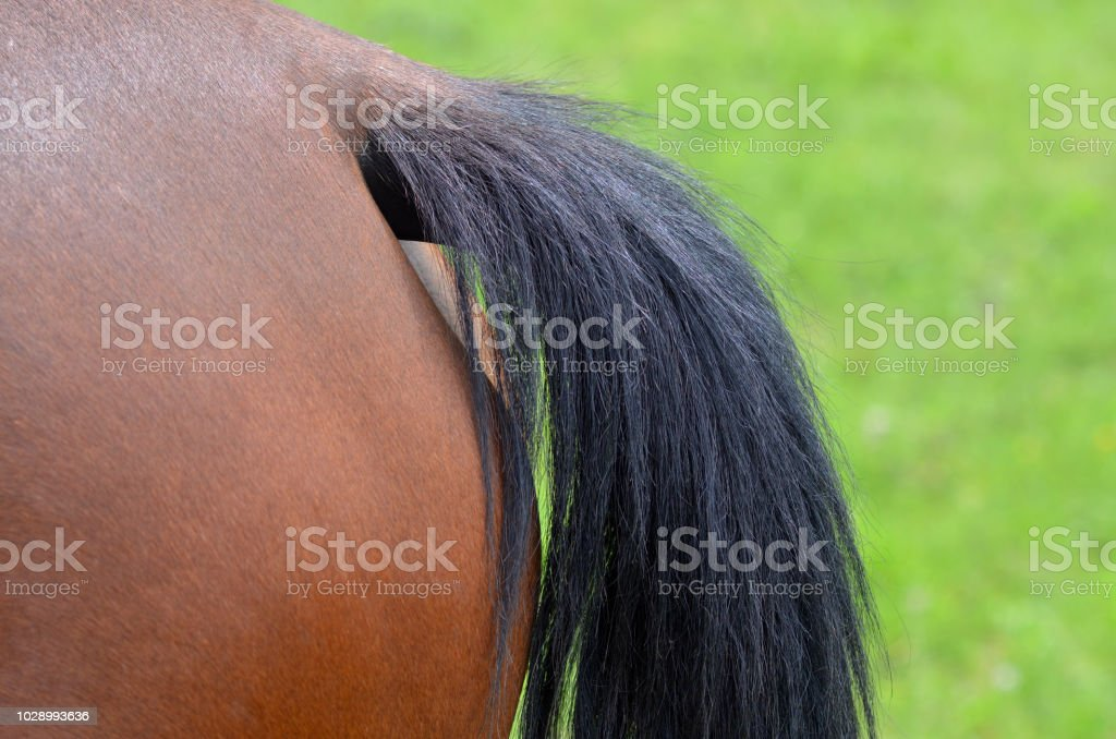 Horse tail close up stock photo