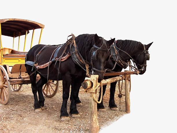 pferd-team - scheuklappe stock-fotos und bilder