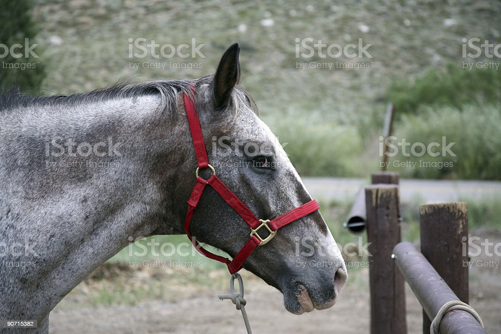 Horse tied up stock photo