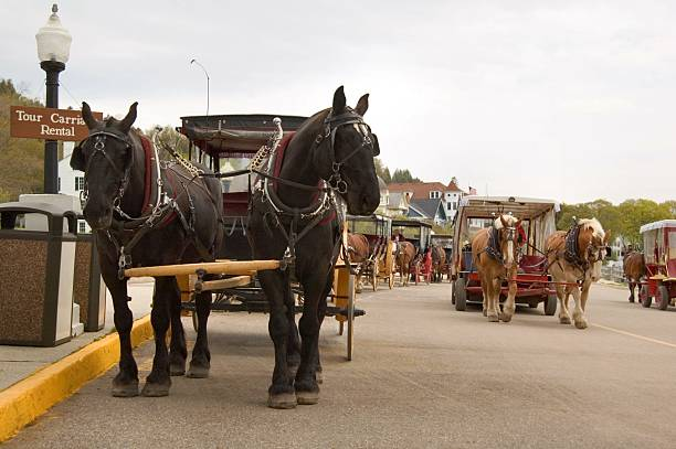 horse traffic - mackinac island stock photos and pictures