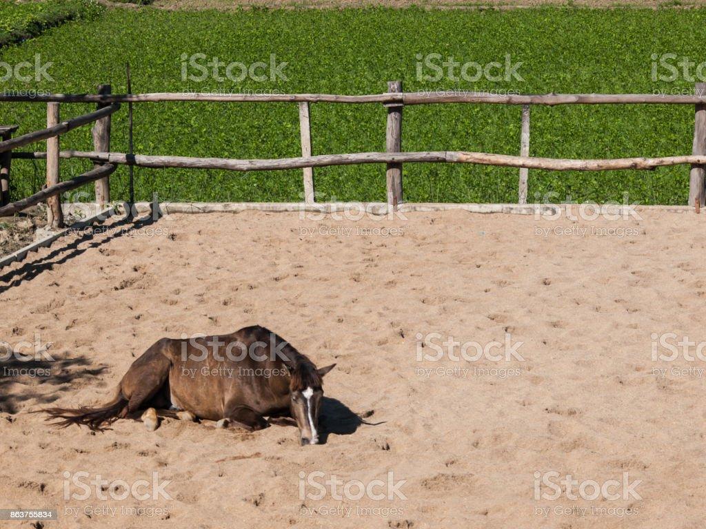 Horse training ground stock photo