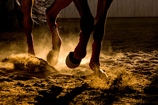 Close-Up Shot of a Brown and White Horse's Hooves Walking Down a Gravel Road on a Sunny Day
