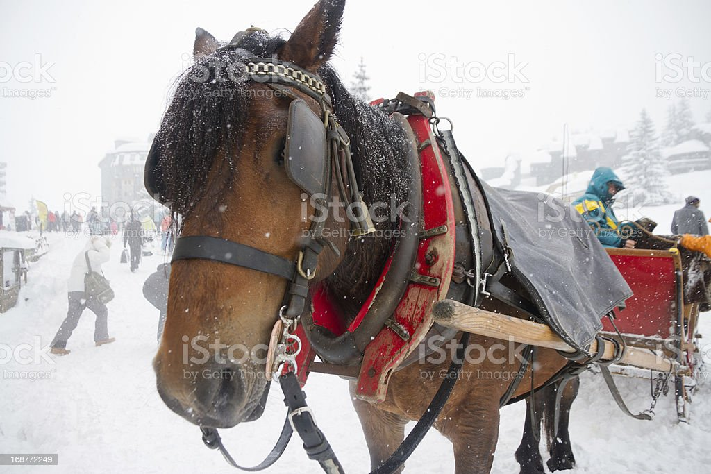 Horse transport in whiteout. royalty-free stock photo
