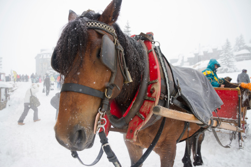 Horse transport in whiteout.