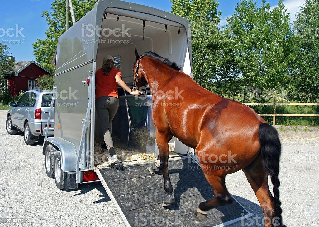 Horse Transport, Norway royalty-free stock photo