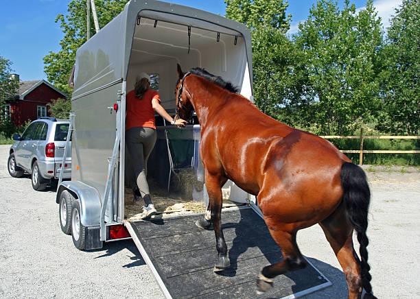 Horse Transport, Norwegen – Foto