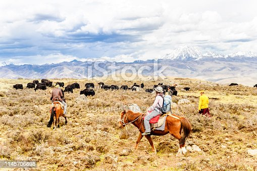 11th April 2015: View on Horse Trekker and Yak herds with nomads in the highlands of Sichuan