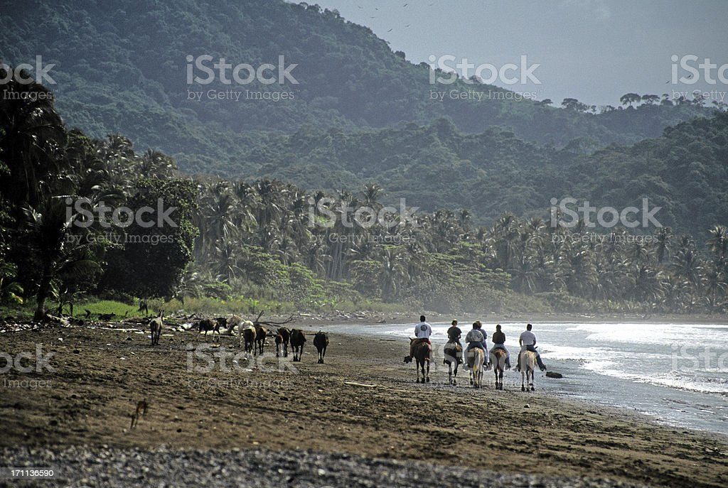 horse trip in costa rica stock photo
