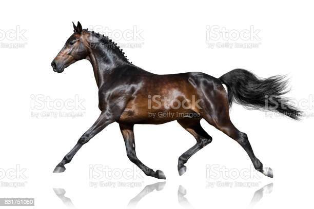Horse trotting on white picture id831751080?b=1&k=6&m=831751080&s=612x612&h=xzhau esz7o8rt6vtgracwxgqajc6rtts7uonyotv94=