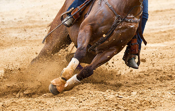Horse Turning stock photo