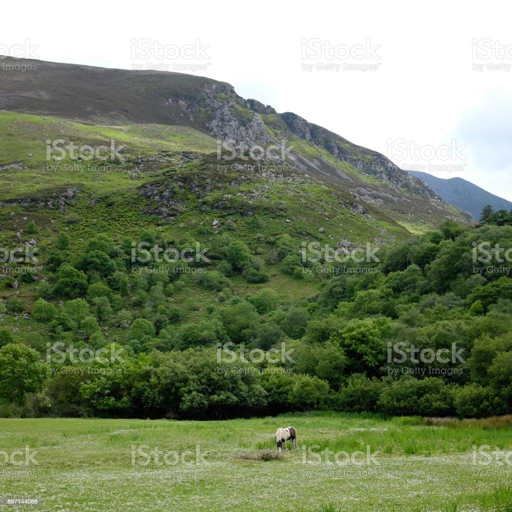 Horse under mountains stock photo
