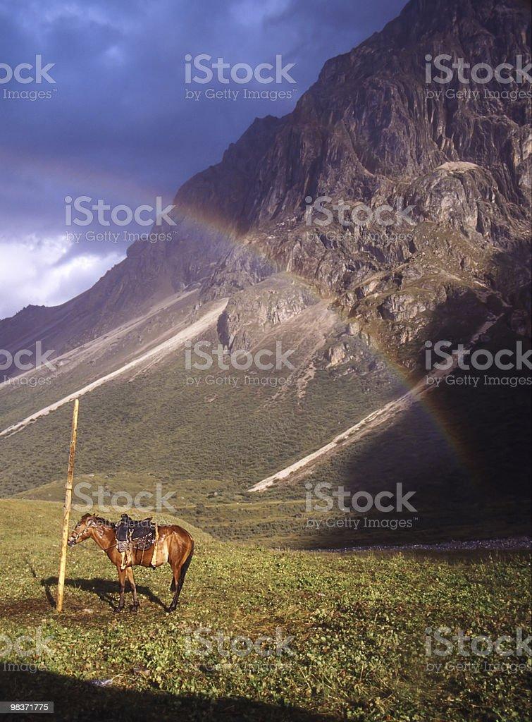 horse under rainbow royalty-free stock photo