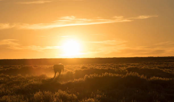 A horse walking infront of a setting sun stock photo