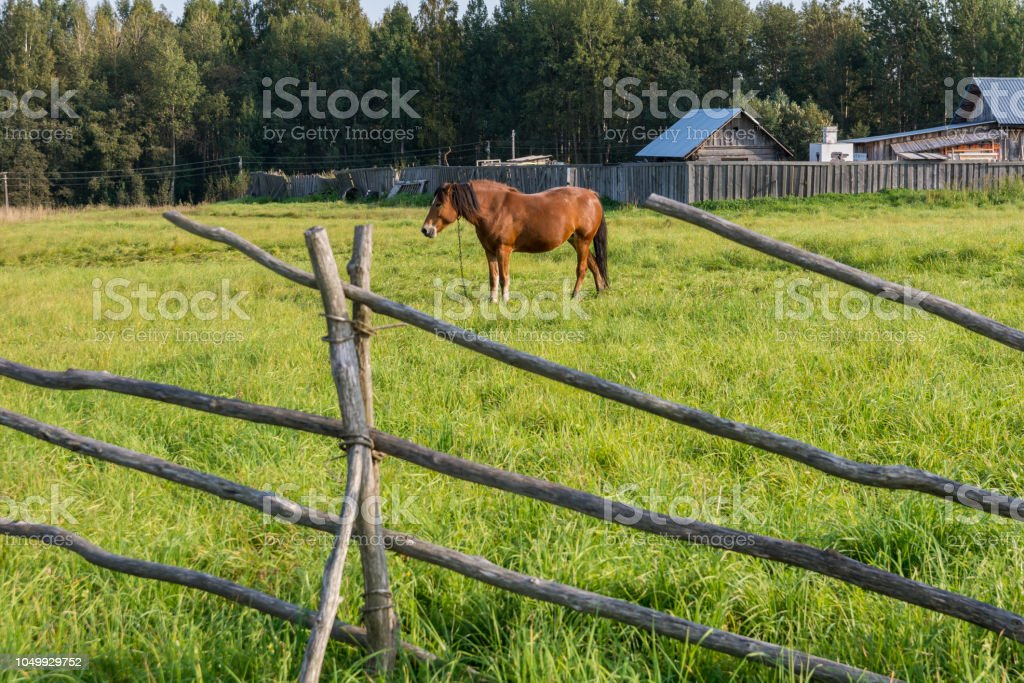 Horse walks behind the fence stock photo