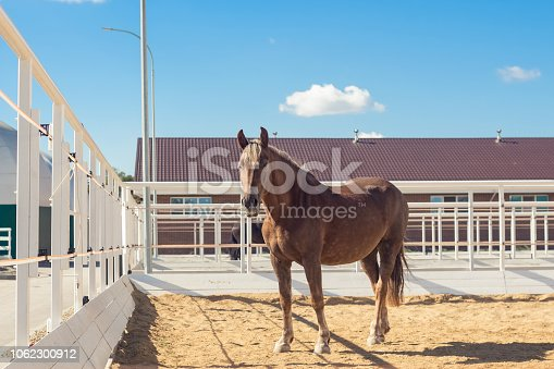 Horse walks in the paddock in a modern equestrian club. Calm relaxed animal rests. Portrait in full growth. Outdoors selective focus image in summer day.