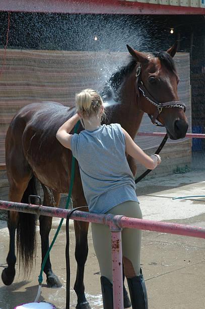 Horse Wash stock photo