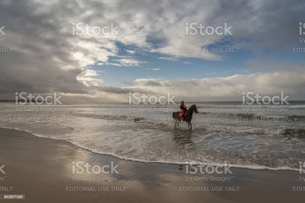 Horse water exercise at beach stock photo