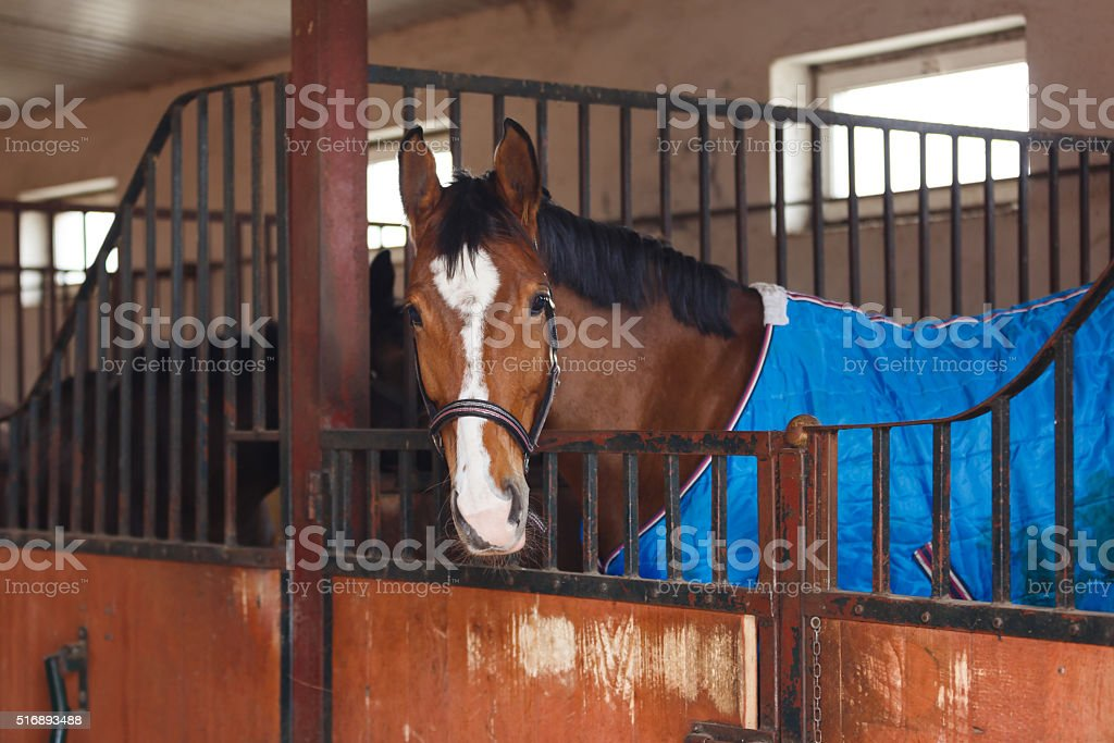 Horse wearing a blanket stock photo