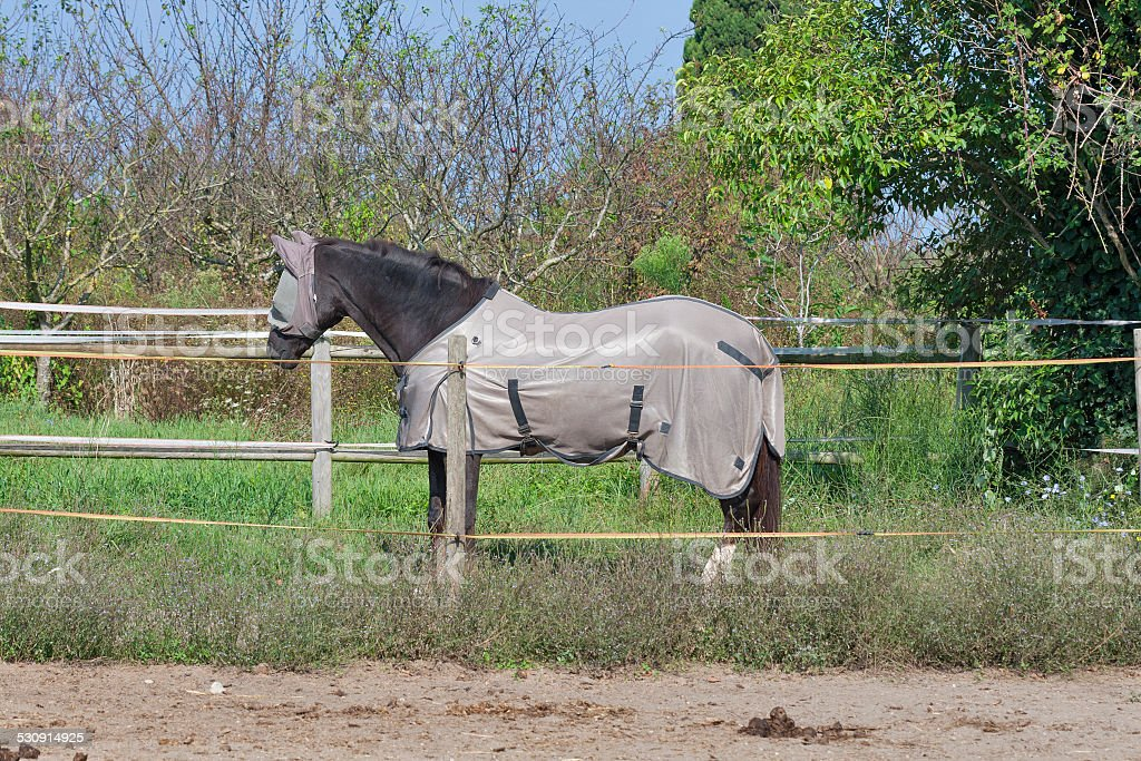 horse wearing fly mask and body blanket stock photo