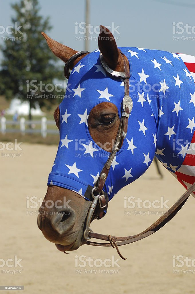 Horse Wearing Head and Neck Wrap stock photo