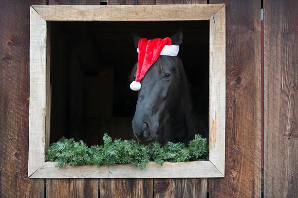 Horse Wearing Santa Claus Hat stock photo