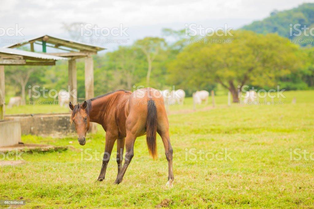 Horse Weird Pose Lizenzfreies stock-foto