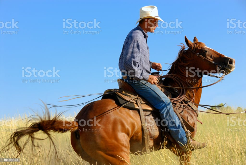 Horse Whisperer stock photo